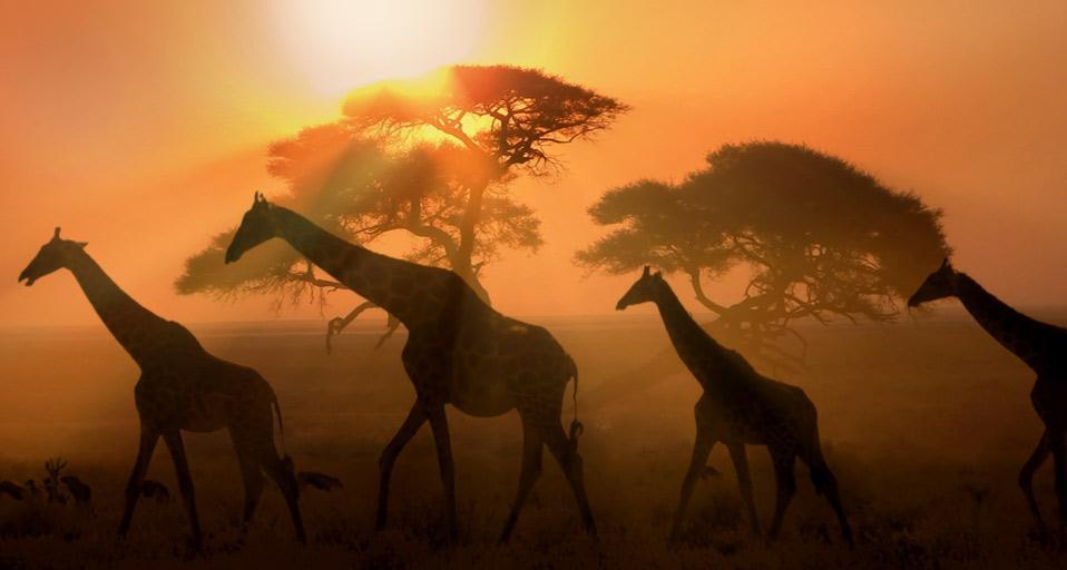 Namibie, Namibie - 11240-namibie.jpg
