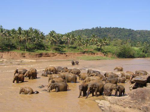 sloni -