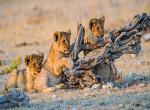 Safari v Namibii