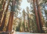 Národní park Sequoia -