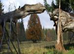 Rekreační středisko Rybník, Český Les, Rekreační pobyt