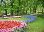 Keukenhof - největší květinový park na světě