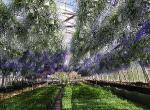 Hveragerdi - město květin