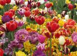 Floriade -