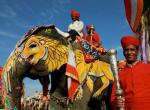 indický slon -