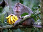 Kedaton, opičí rezervace