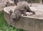 Berlin ZOO, slon