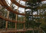 Korunami stromů