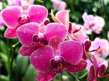 Výstava orchidejí - Drážďany