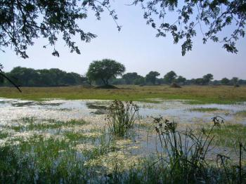 Národní park Keoladeo -